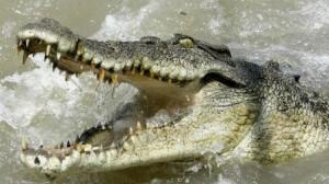 crocodile.image