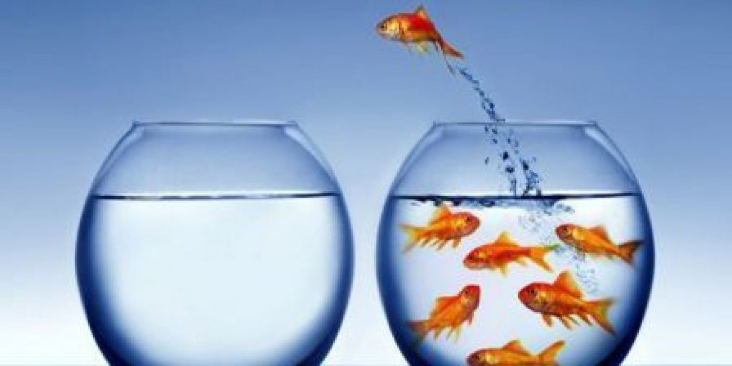 Goldfish, the customer experience and the indeterminate growing conundrum