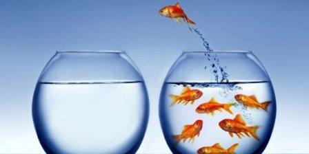 goldfish.bowl.image.2015