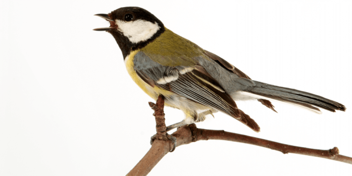 Jabra: Why Bird Sounds Make Us More Productive