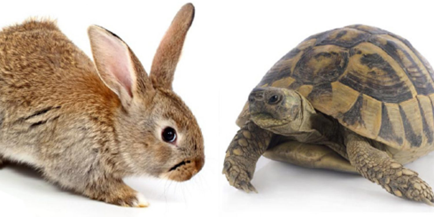 Tortoise or Hare – Which One is Your Contact Centre?